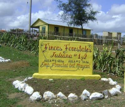 Las fincas forestales nacieron en Villa Clara.